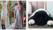 SHOWBITS. Ella Leyers deed een miskoop en welk ex-K3'tje haalde deze schattige puppy in huis?