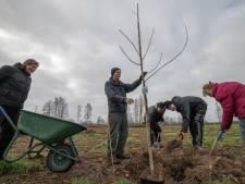 Herstel 'ouderwets' Hulshorster landschap begint met tien okkernoten