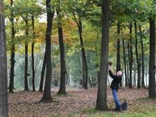 Appie uit Overloon hing al honderden vogelhuisjes op in de natuur: 'Ik kan er zo'n 15 per uur maken'