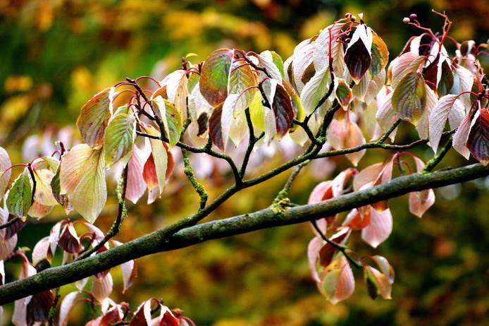 In de herfst geniet ik van de prachtige kleuren in de natuur.