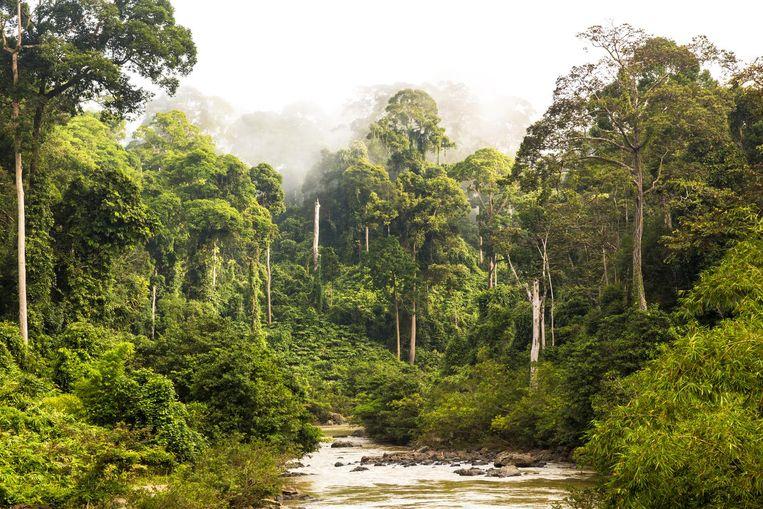 Indonesië vormde voor Hella Haasses Heren van de thee de grote inspiratiebron. Beeld Getty Images