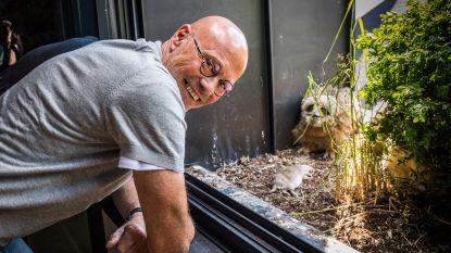 """Opmerkelijk 'oehoesprookje' in het balkonnest van Gelenaar Jos is ten einde: """"Risico op fatale afloop na een zoveelste val werd te groot"""""""