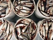 Vissen sterven gruwelijke dood