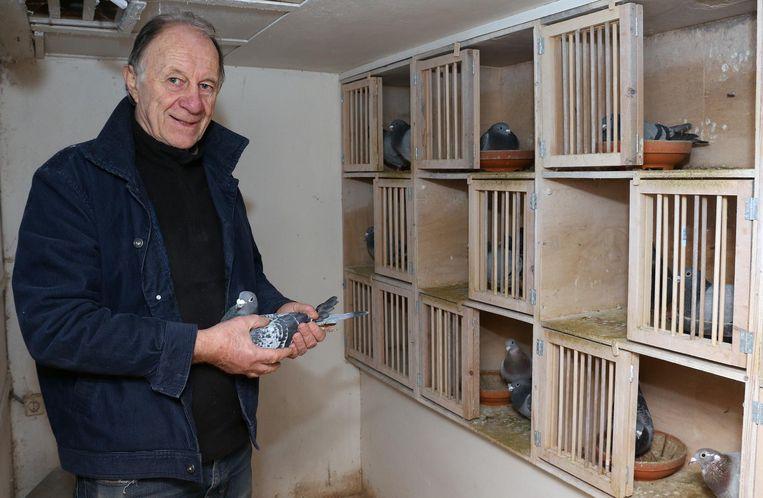 Jos Cools in zijn duivenhok. Met de duiven die hij nog heeft wil hij opnieuw de Vlaamse top bereiken.