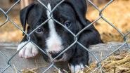 De zomer is een vreselijk seizoen voor veel dieren: duizenden baasjes dumpen hun huisdier in asiel
