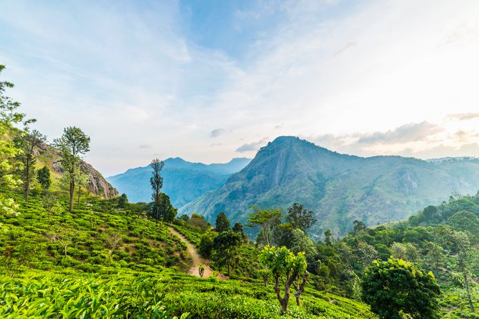 Theeplantage,  Ella, Sri Lanka