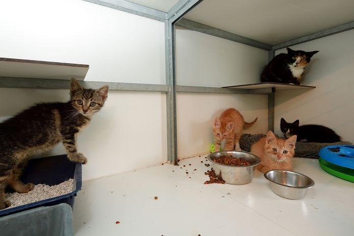 Kittens bij Dierenopvang Arduin in Roosendaal.