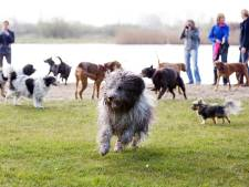 Hondenuitrenveld in het Seghwaertse Hout