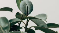 Zo kun je dode planten weer tot leven wekken