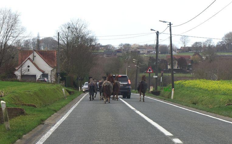 Arno ging voor de paarden rijden  op de Langestraat