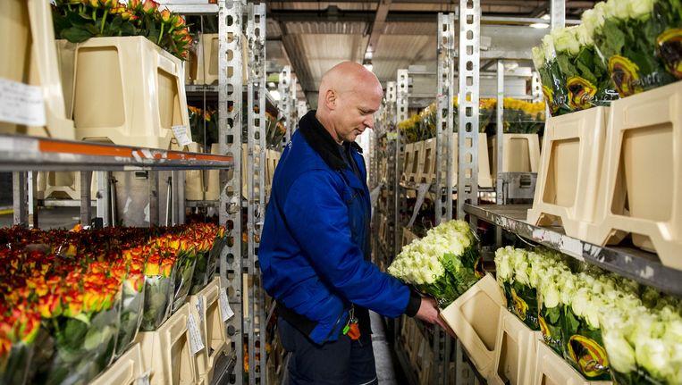 In Aalsmeer worden veel bloemen naar Rusland verhandeld Beeld anp
