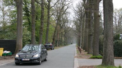 """Kapellen kapt 170 bomen in Kasteeldreef: """"Niet wachten tot er slachtoffers vallen"""""""