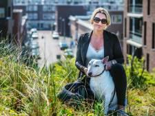 Hond trekt zich terug uit de stad