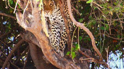 Zes safari's om bij weg te dromen
