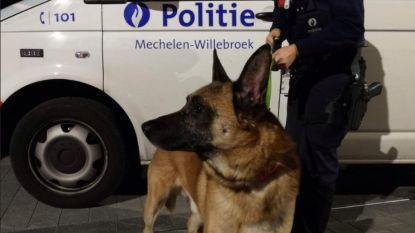 Politie zoekt eigenaar van hond die werd vastgebonden aan reling Dijlepad