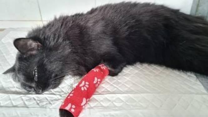 """""""Hou uw kat wat binnen"""": dierenarts verwittigt eigenaars na vergiftiging in Tinekeswijk"""