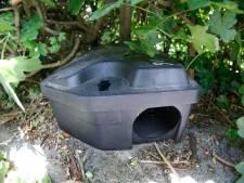 Meer meldingen over ratten in Oosterhout: 'Mensen zijn meer thuis'