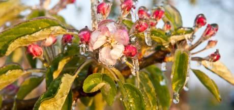 Nieuw snoepbos langs Lagunesingel