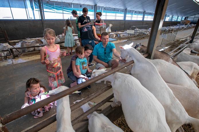 De familie De Punder uit Gerwen voert de geiten.