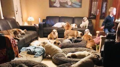 """Limburgs jongetje (6) leeft tussen 24 honden: """"Minderen met je honden of we halen je zoontje weg"""""""