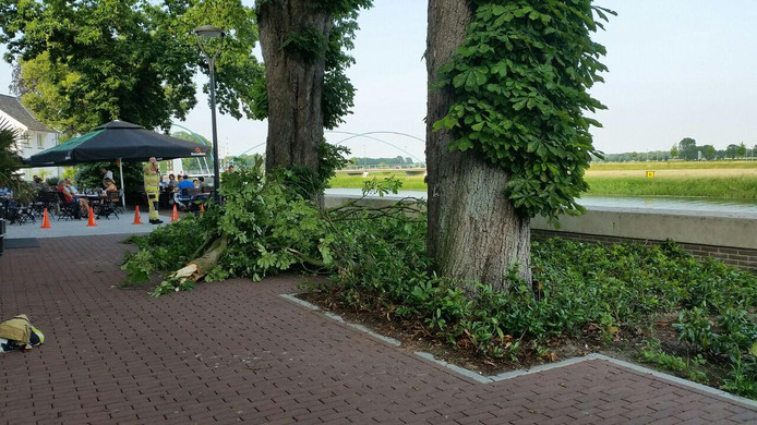 Gasten op het terras van De Fabriek in Dalfsen werden bijna getroffen door een vallende tak.