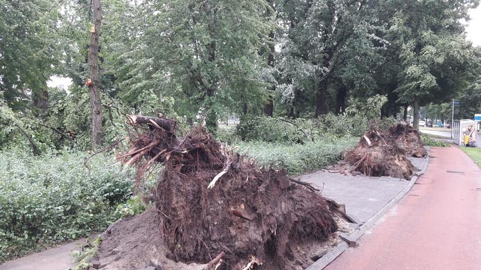 Langs de  Geldropseweg in Eindhoven vielen meerdere grote bomen om bij de storm.