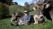Zwitsers verwerpen in bijzonder referendum subsidies voor gehoornde koeien