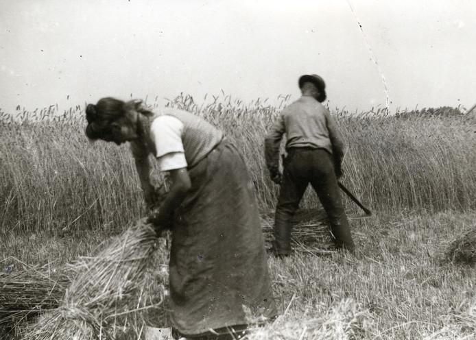 Oogstfoto uit vervlogen tijden. foto CODA archief