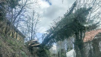 Storm houdt lelijk huis in de Vlaamse Ardennen: Taaienberg in Maarkedal afgesloten, zwembad in Oudenaarde ontruimd, reclamepanelen en tientallen bomen weggeblazen