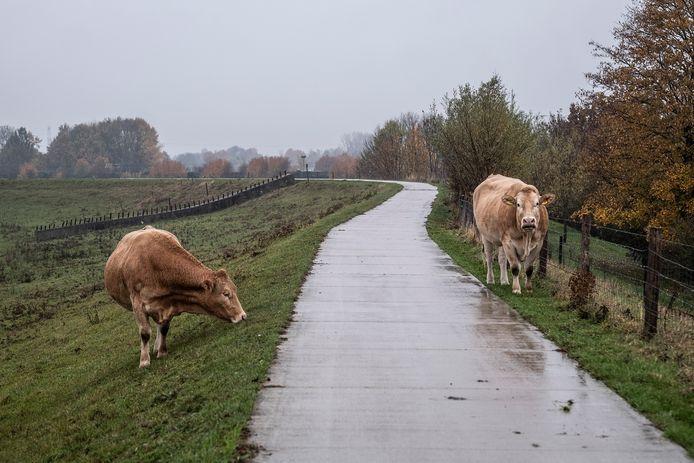 Al wat rest is gras, bomen, grazend vee en vier grote kolken of waaien.