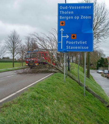 Wind blaast boom omver in Sint-Annaland