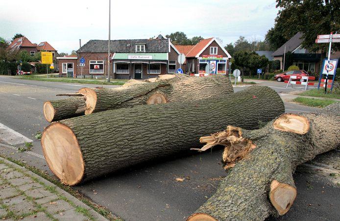Omgezaagde bomen op de kruising 'Rustoord' bij Rietmolen.