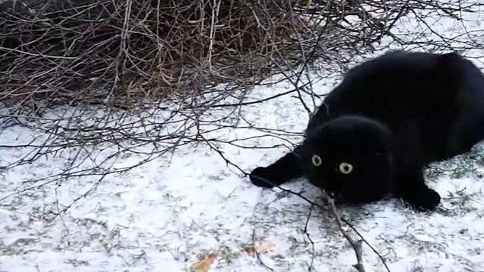 Kat loopt voor het eerst in de sneeuw en weet duidelijk niet wat hij er moet van denken