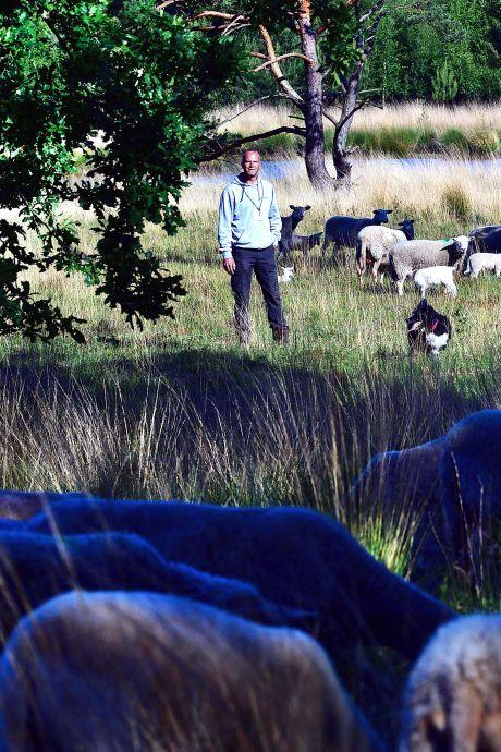 Hoe doe je dat: schapen houden met een wolf in de buurt?
