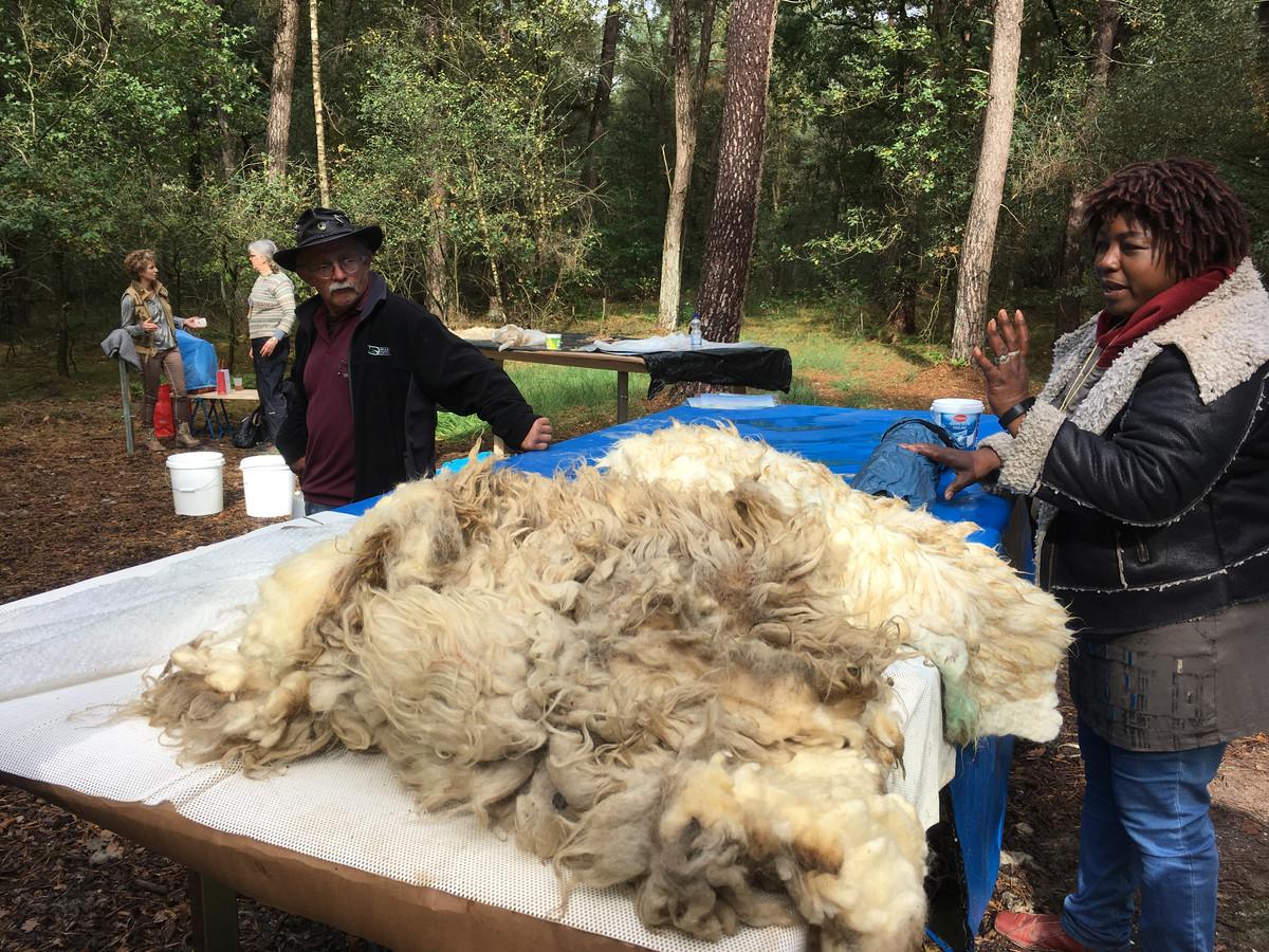 Oerweekend Maashorst wol