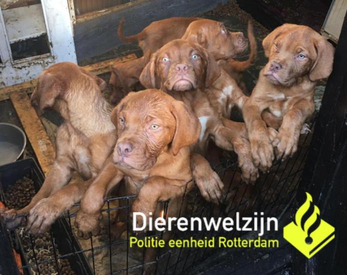 Er werden acht puppy's gevonden.