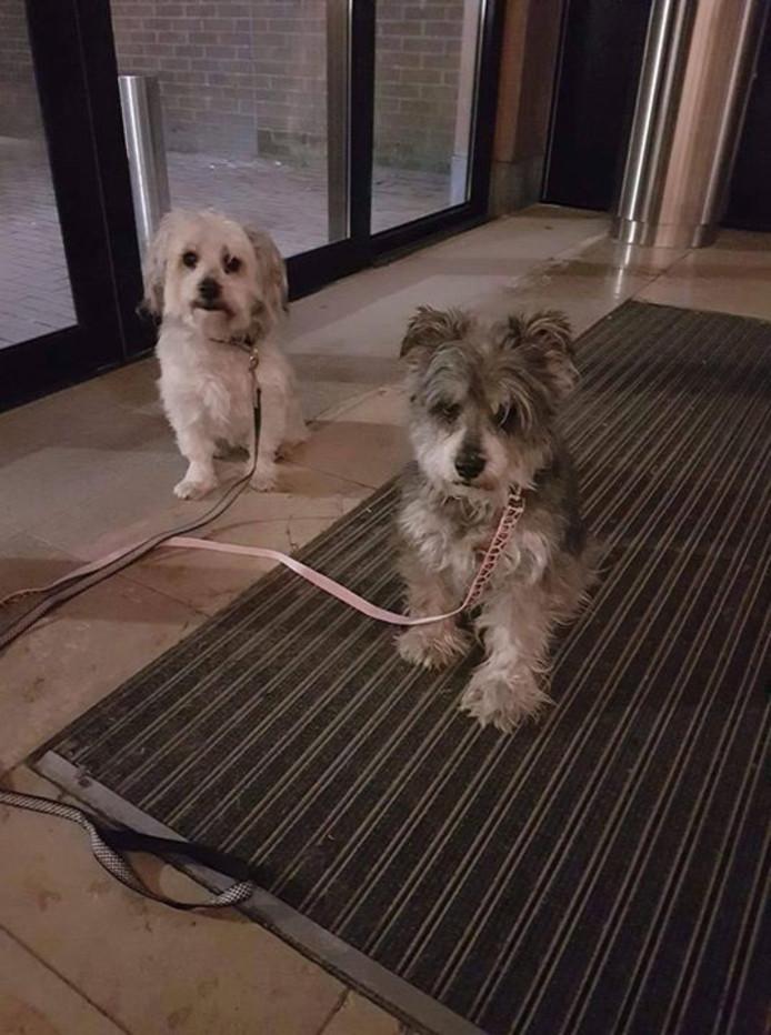 De achtergelaten hondjes in winkelcentrum Waalwijk