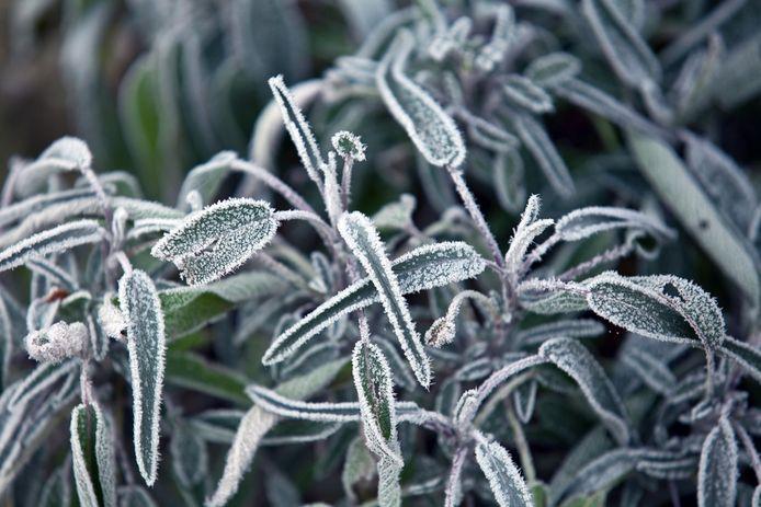 De winterse tuin, niet alle planten en bomen kunnen er even goed tegen.