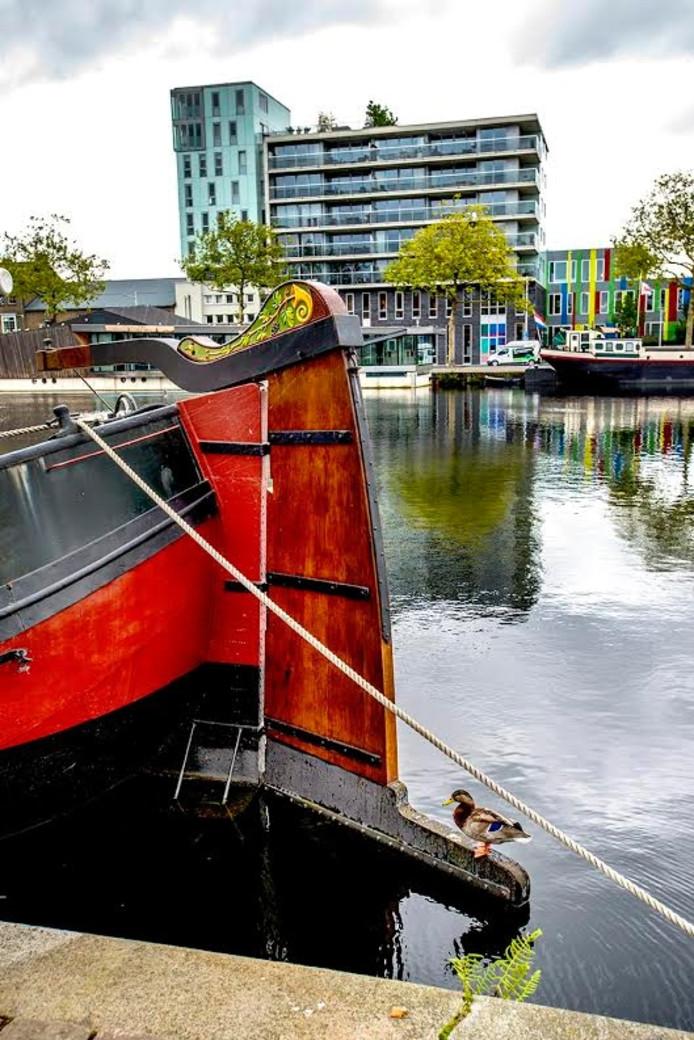 Een eend aan de Piushaven. Foto Jan van Eijndhoven/BeeldWerkt