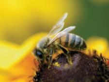 Etude inquiétante sur l'impact des pesticides sur les abeilles