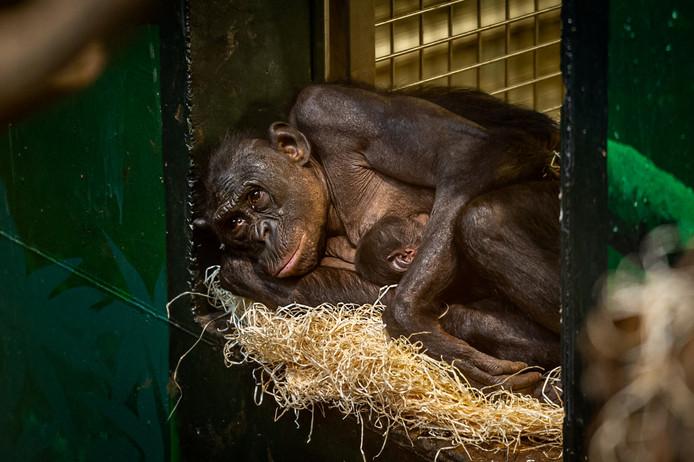 Djanoa et son bébé.
