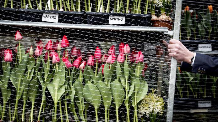 Bloemenatelier Knol aan de Deventerstraat mag geen bloemen vanuit de garage verkopen, maar de buren moeten het atelier wél accepteren op die plek.  Buren vreesden aanloop van klanten.