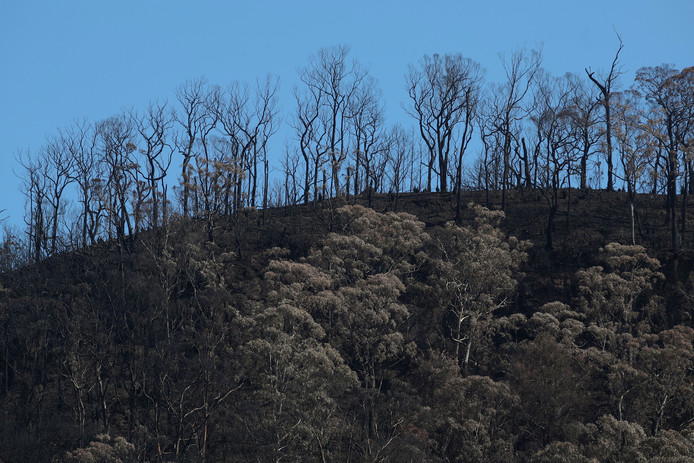 Verbrande bomen in New South Wales.
