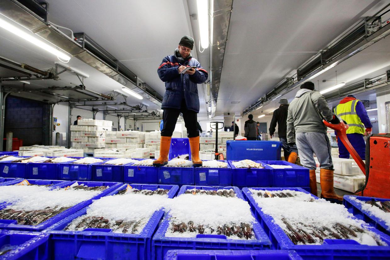 De visafslag in het Schotse Peterhead, de zeevishoofdstad van Europa. Er wonen zo'n 19 duizend mensen.  Beeld  Matthew Lloyd / Getty