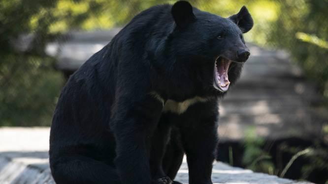 Drones en vuurwerk ingezet tegen berenplaag in Japan