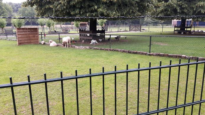 De dieren van kinderboerderij De Bossche Hoeve werden niet geaaid
