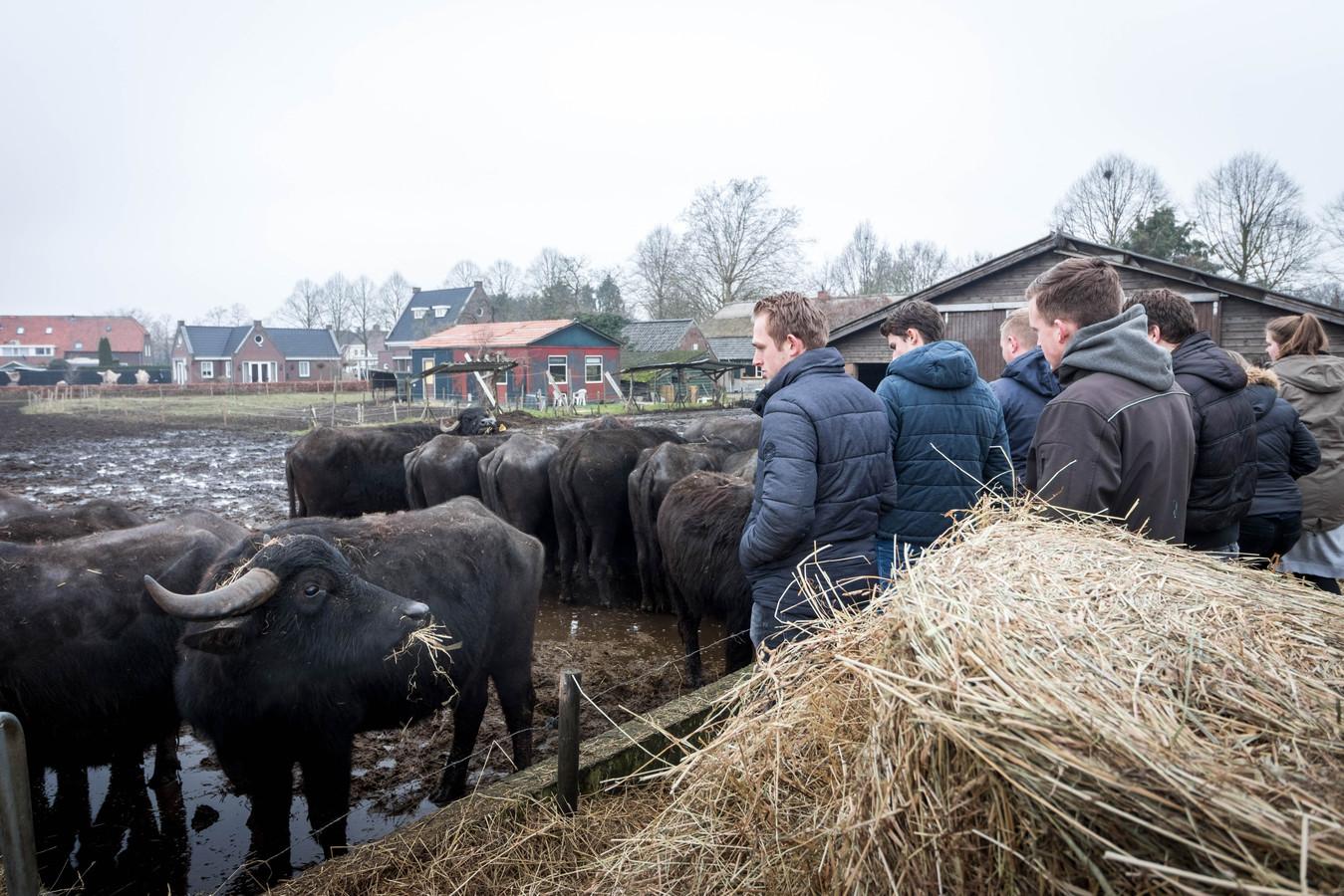 Leerlingen van Helicon in Boxtel bezochten dinsdagmiddag buffelboerderij de Stoerderij in Breugel.