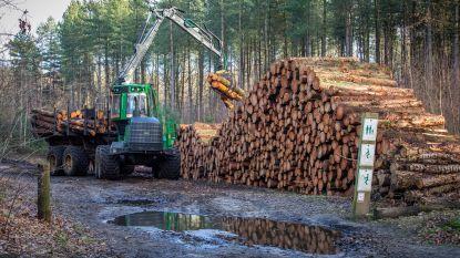 """Waarom bomenkap aan Schoterheide een goede zaak is voor de natuur: """"Uitdunning zorgt voor meer biodiversiteit"""""""