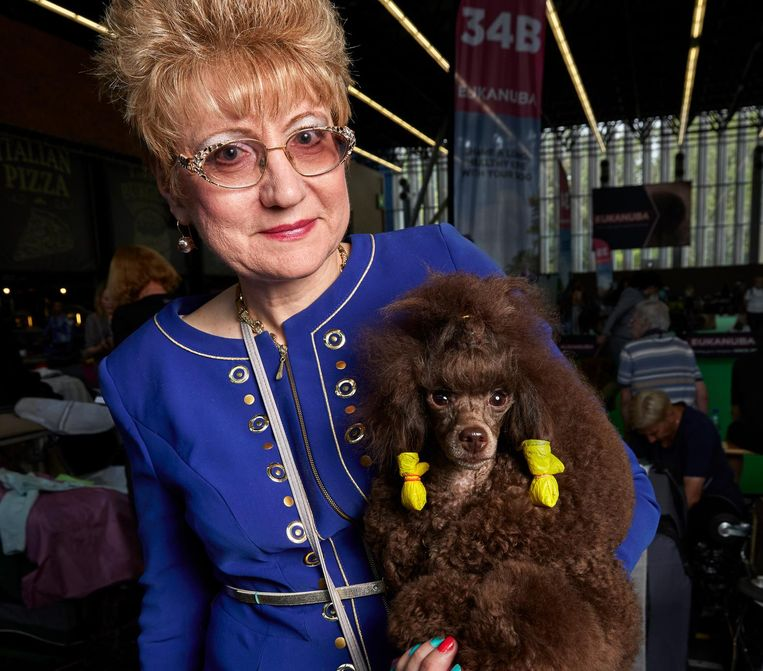Toy poodle uit Rusland. Namen van poedel en eigenares onbekend Beeld Isabella Rozendaal