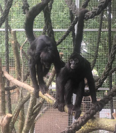 Nu ook aapjes kijken in dierenpark Zie-ZOO in Volkel